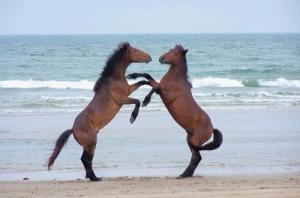corolla-wild-horses